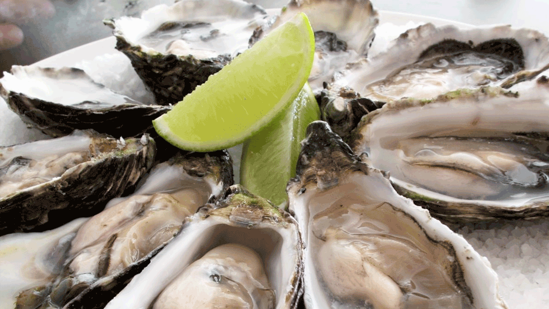 Shore Foodie Newsletter Oysters